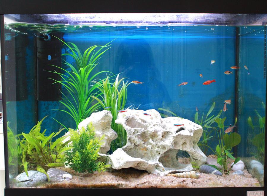 My Fish tank by ILOVEEXPERIMENT626 on deviantART
