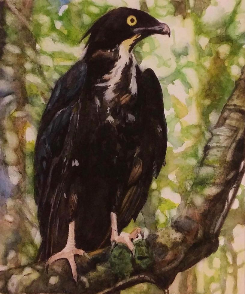 Bat hawk by Laveygirl