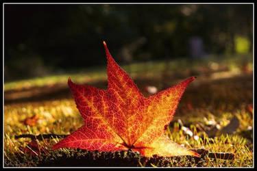 autumn ablaze by Shellbel