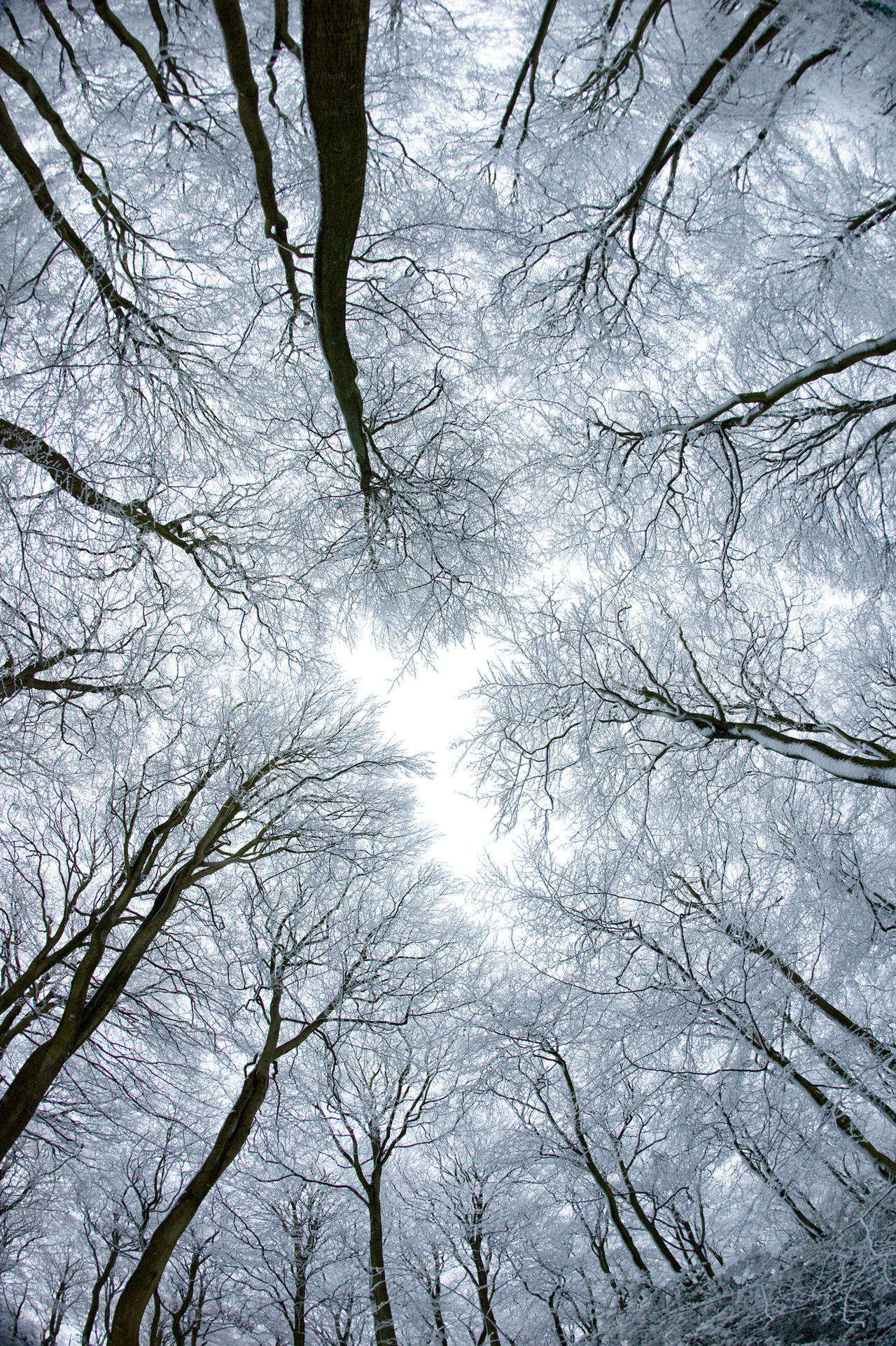 winter and snow trees - photo #27