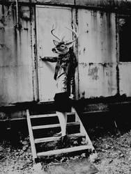 Dear deer by hlcr