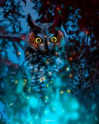 Owl in the night.