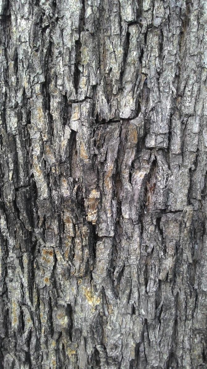 Bark by dilarosa