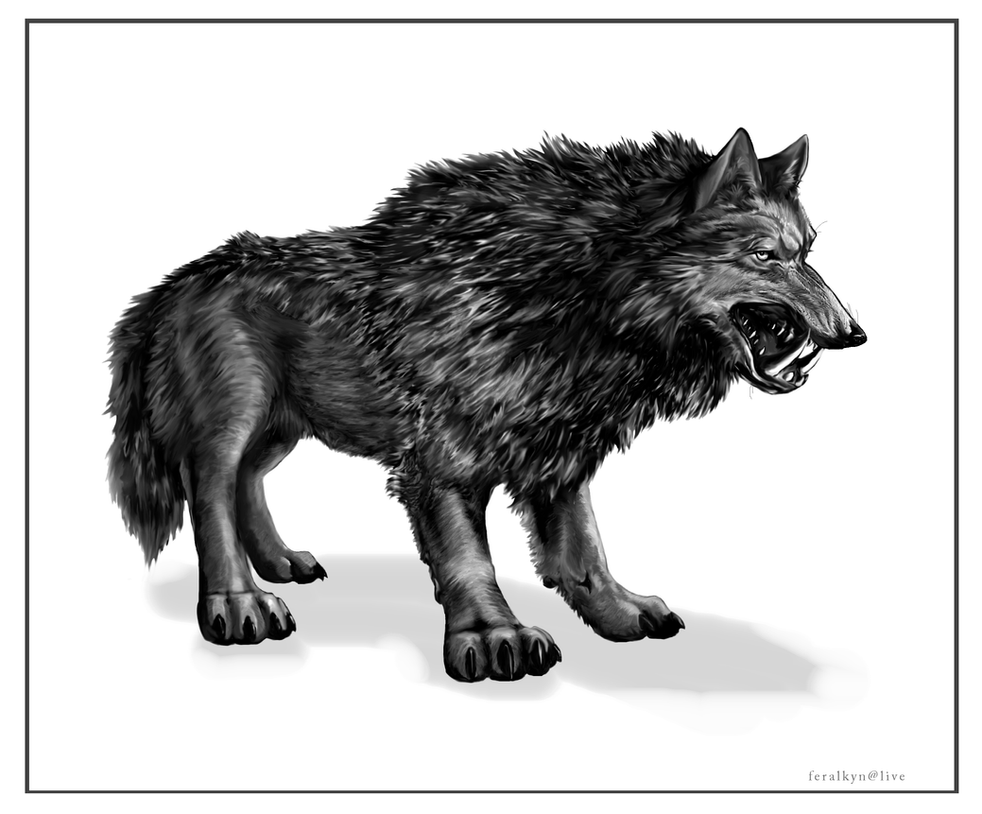 #018 - Night Stalker Dire_wolf_by_feralkyn-d3cqc09