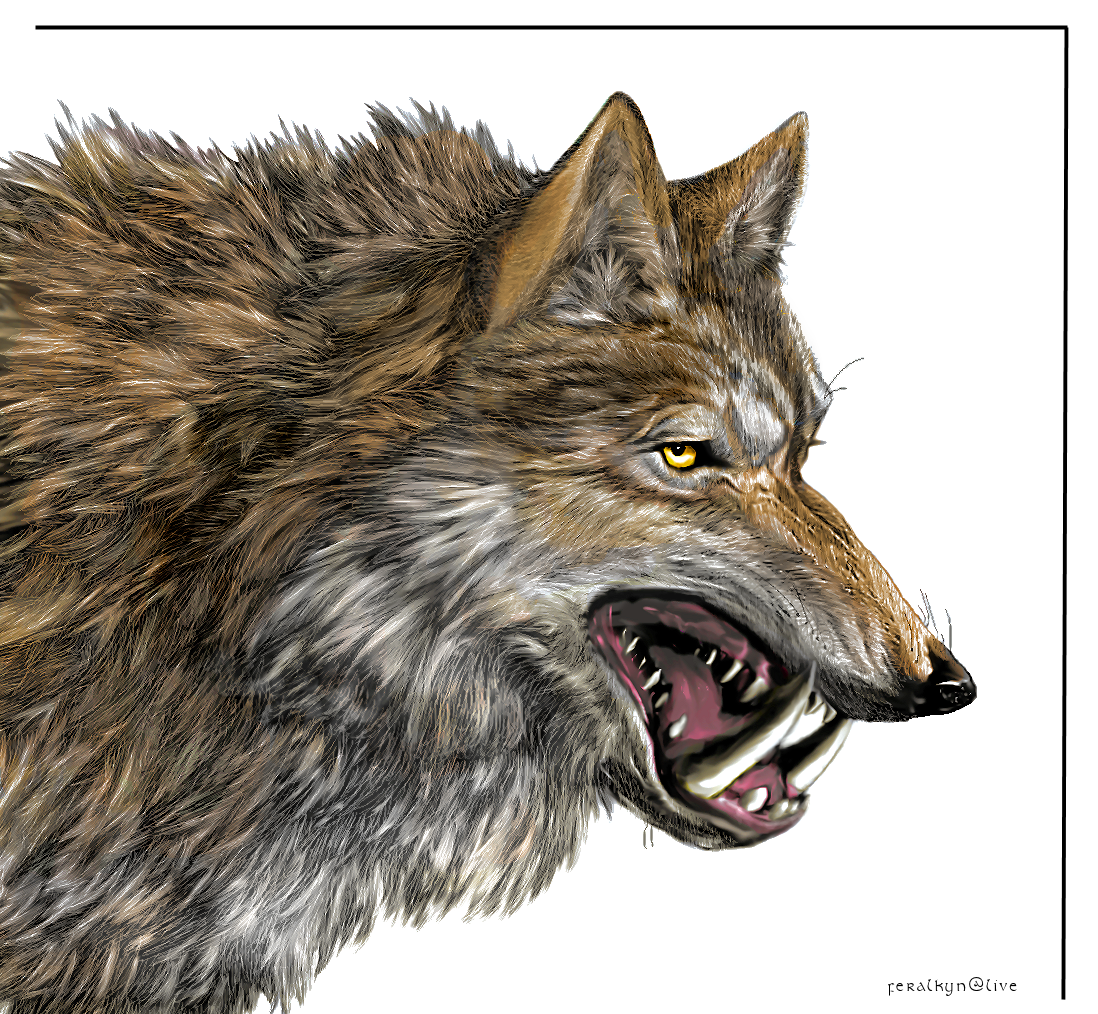 Dire Wolf Color By Feralkyn On Deviantart