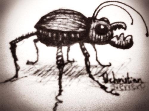 coleoptera by misterpila
