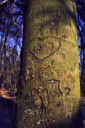 A love tree
