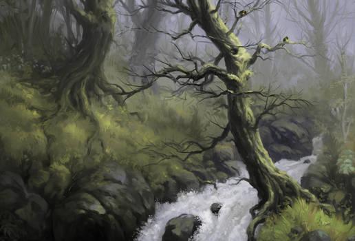 2019 Woods, part II