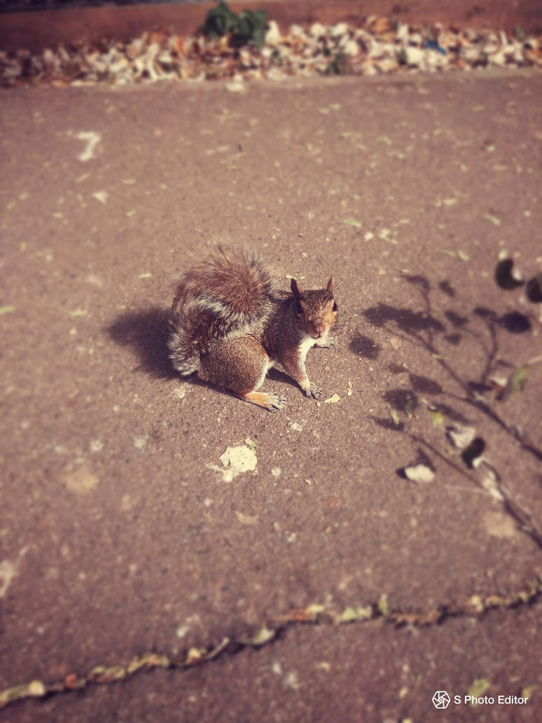 Squirrel - On a trip to London by AuroreMaudite09
