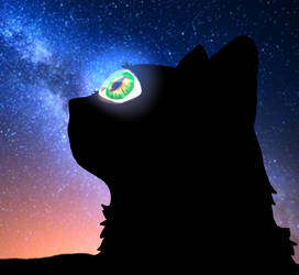 Maliedora Cat Profile Pic - Night