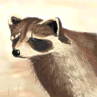 Realistic raccoon by puk