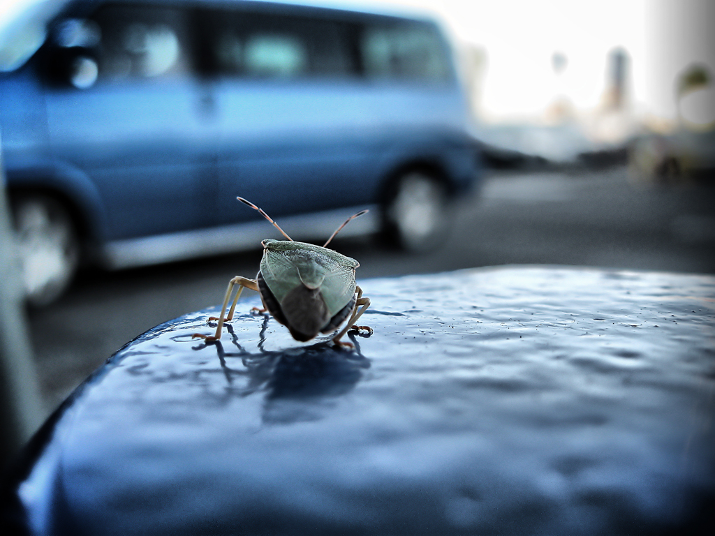 buggy by triSh-xTr