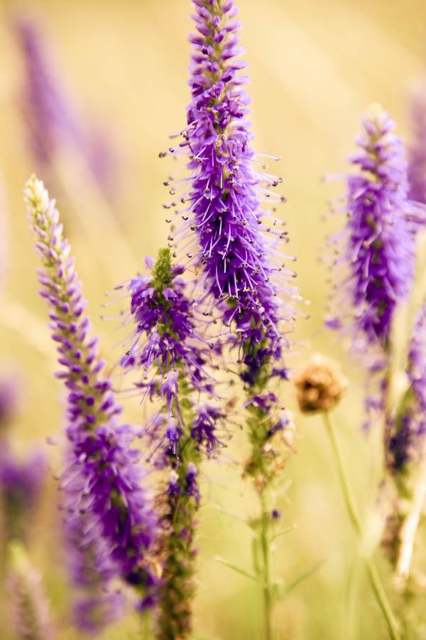 kwiatek by mmonart