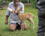 Deer Fawn 005 - Stock