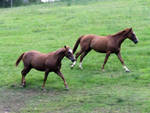 Horses 004 - Stock