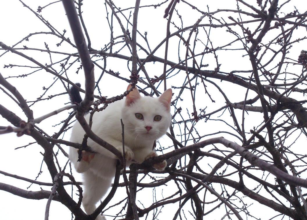 Sneaky kitten by azierr