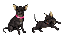Ody's chihuahua by Gabonica