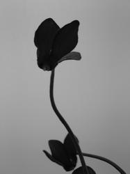 Blossfeldt-a-Like