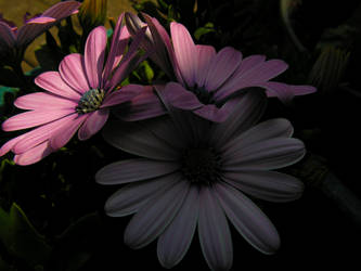 flowers in semi shade by stock1-2-3