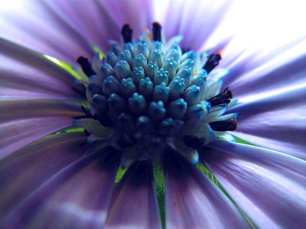 blossom macro by stock1-2-3
