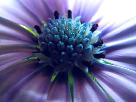 blossom macro