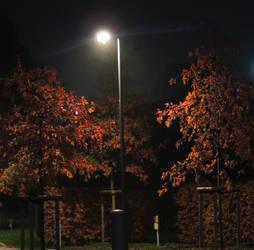 light between the trees