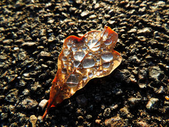 leaf with drops on it