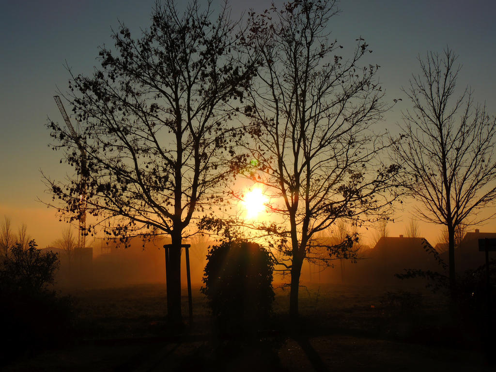 sun between two trees by stock1-2-3