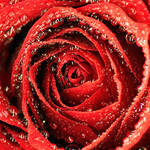 Ruby by EnchantedCupcake