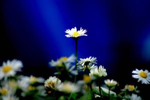 In the Spotlight by Lee-Malzard
