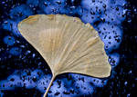 Rain Drops Windshield and Leaf by RobertDanelUllmann