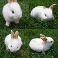 Rabbit by TomieChen