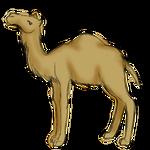 Camel [Sketch Request] by popolis