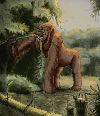 Gigantopithecus Feeding