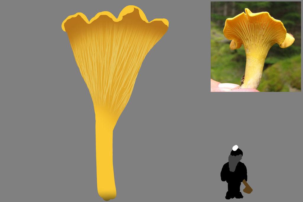 DF Mushroom Trees -  Fungiwood