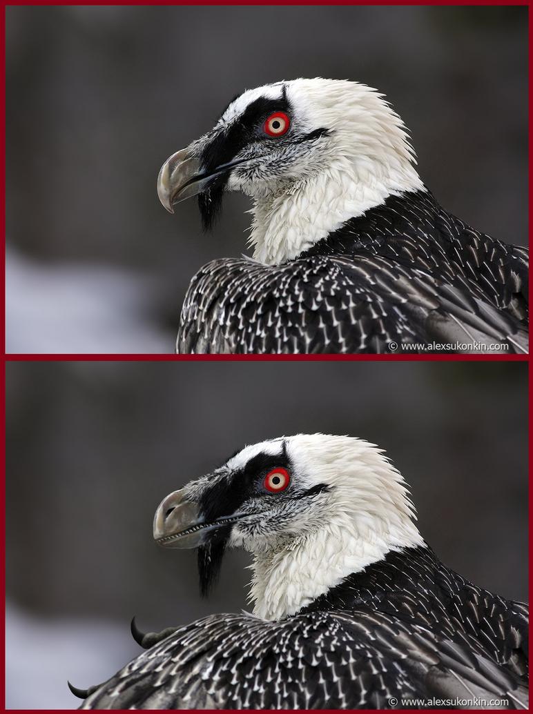 Reverse Evolution by Peregrinestar