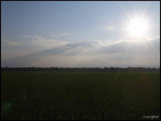 The Sun Field