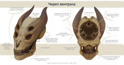 Ventral's skull