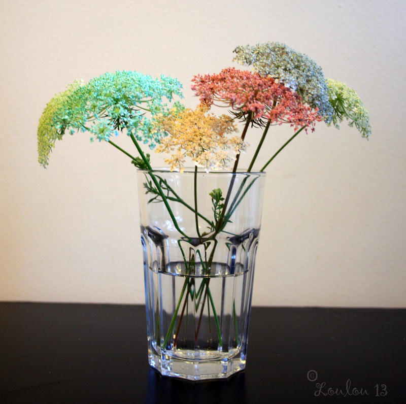 Coloured Queen Anne's Lace by Loulou13