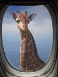 Very Tall Giraffe