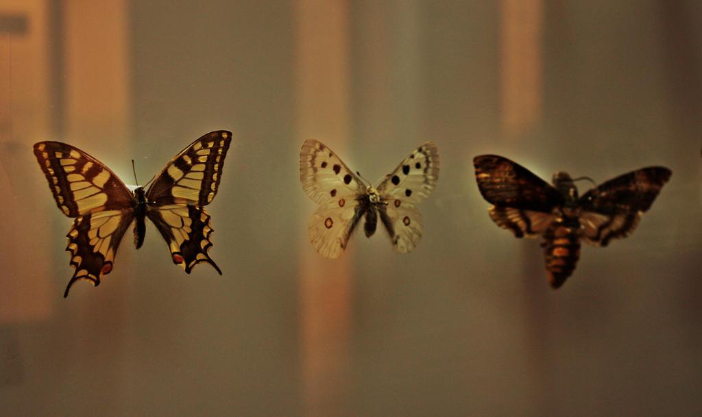 Insectarium. by JinnyJoe