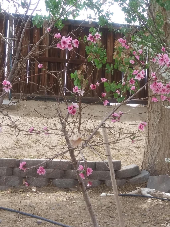 Cherry blossom by Kagome1234545