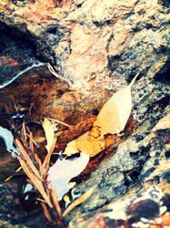 Mini Pond in a Rock