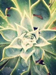 Nature's hidden Diamond