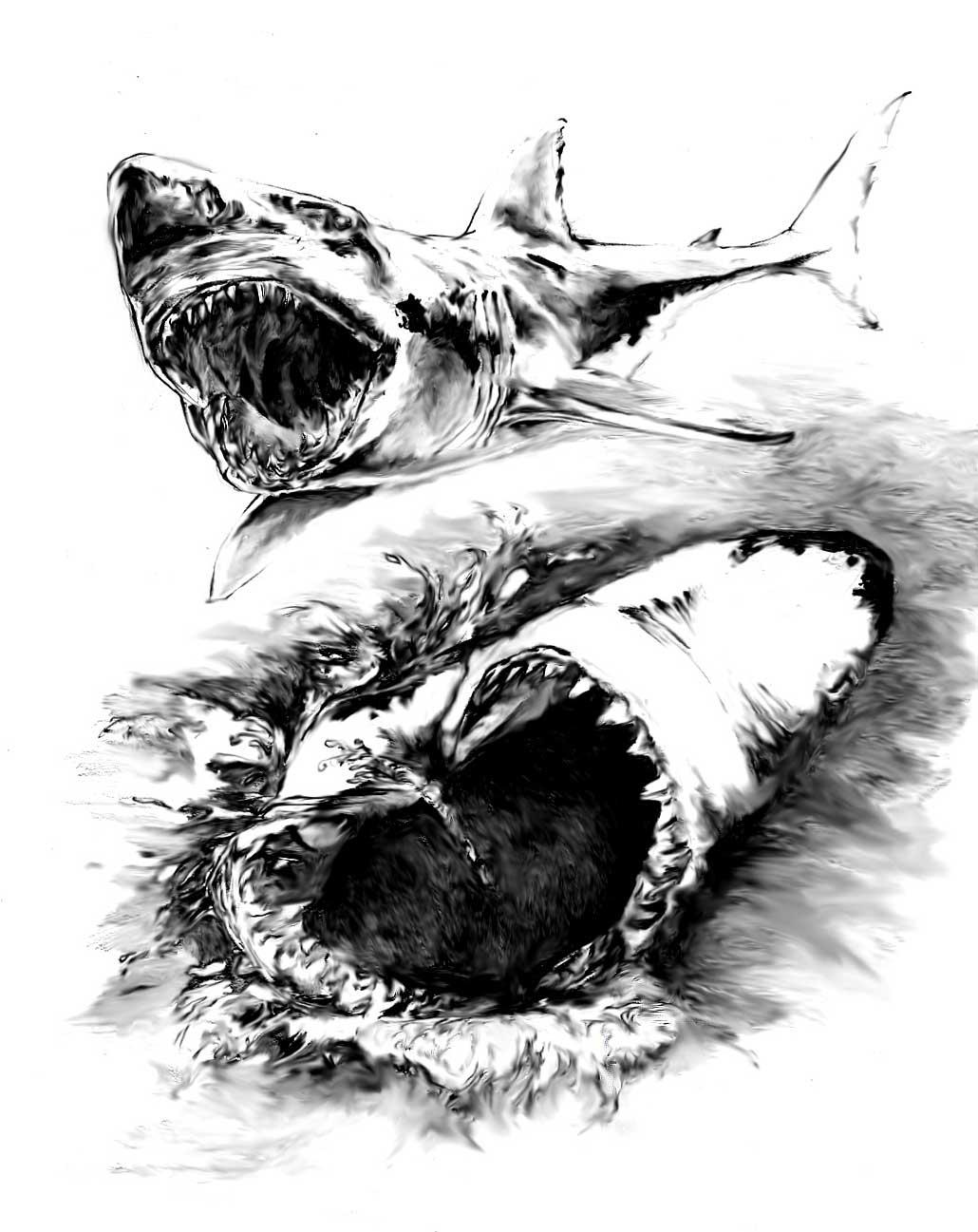 Realistic Shark Drawing Shark-bw by kidtrip98