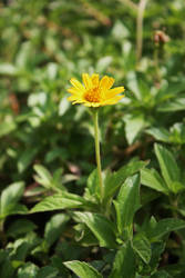 Wildflower 01 by Loy-Pinheiro