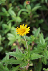 Wildflower 02 by Loy-Pinheiro