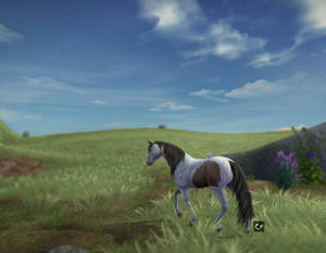 Star Stable Online | Medicine Hat | Edit