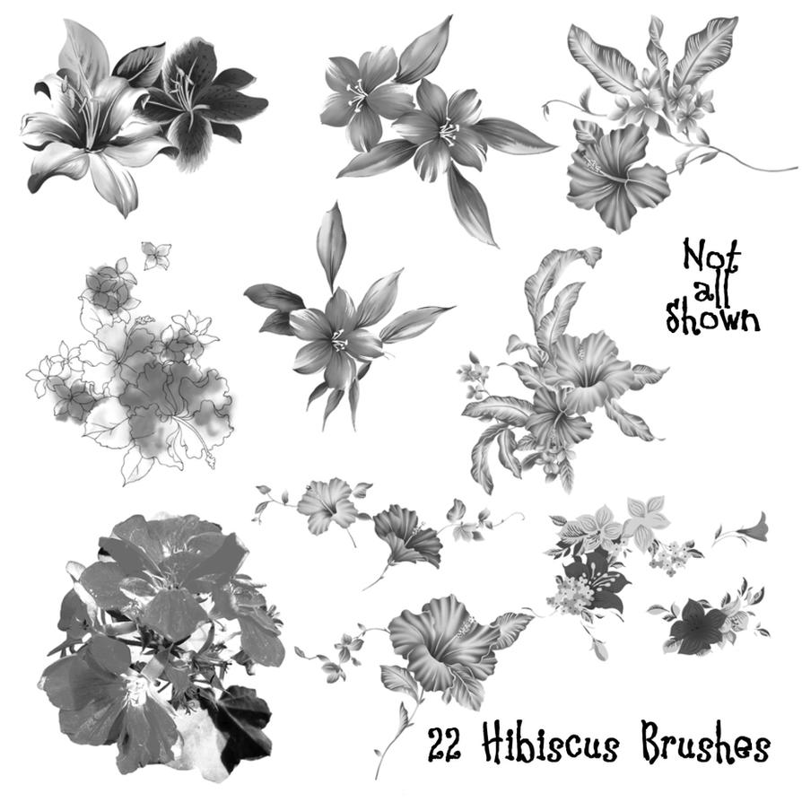 22 Hibiscus Flower PS Brushes by Spyderwitch