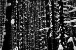 mysterious wood by malyshkamju